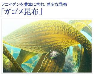 ルプルプ ガゴメ昆布