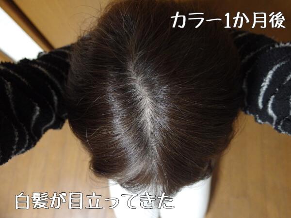 白髪染めする前の白髪頭